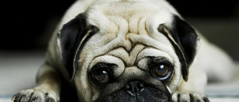 blog-pug6
